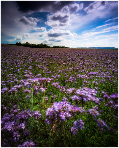 nisifilters benro bluesky canon clouds countryside field flowers focusstack landscape nature perthshire scotland summer