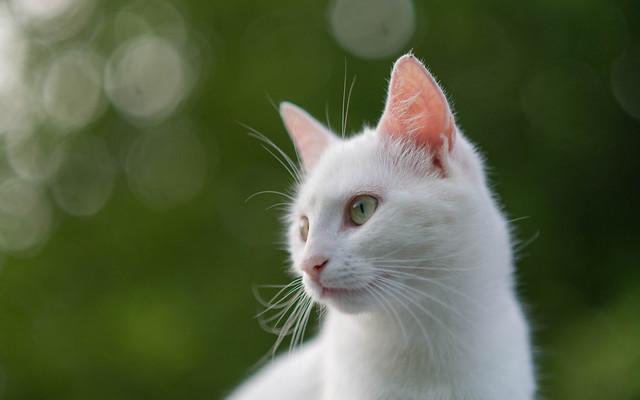 Katty (11)