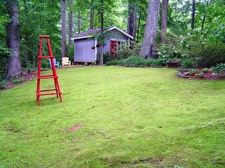 Back Moss Garden
