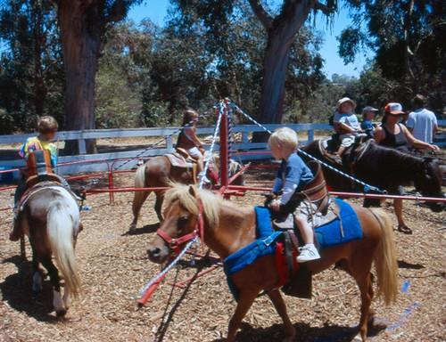 pony-rides-fairfax-va