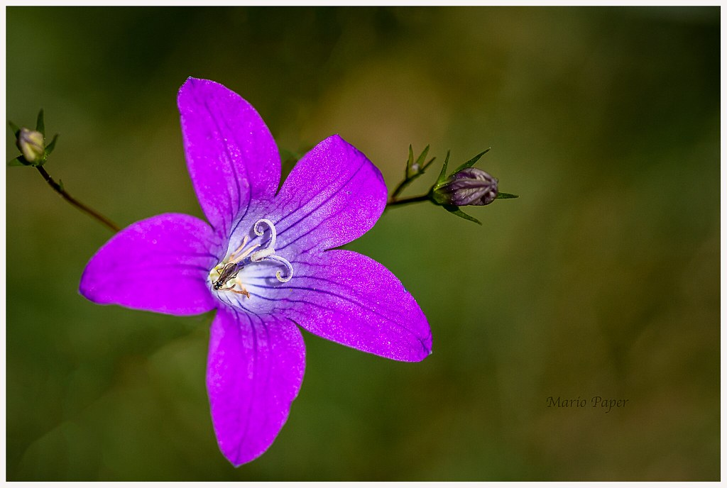 Guten Morgen Und Ein Schönes Wochenende Lg Blumengruß Aus
