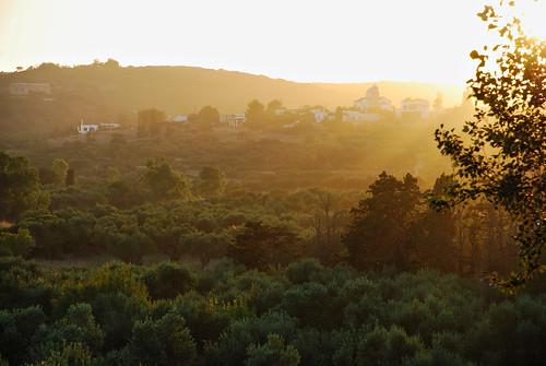 olive trees fields sunset livadi light beautiful kythera kythira greece