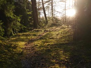 Seili, kuva: Niko Tanski | by Saaristomeren tutkimuslaitos blogi