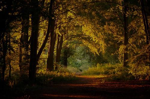 caminho path way trees woods haughmond