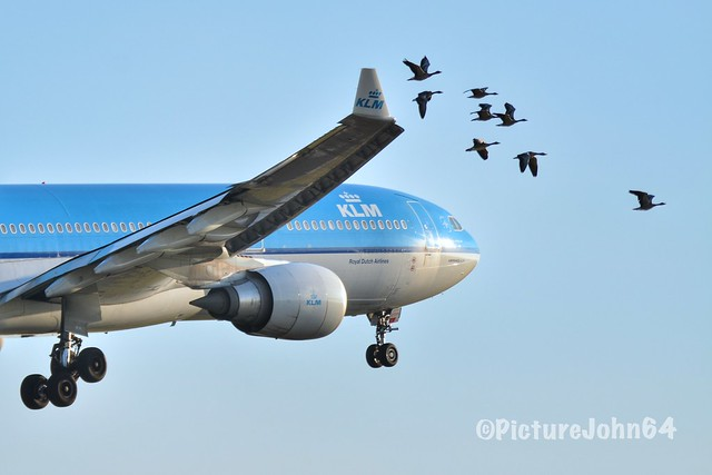Plane vs Birds: KL642 KLM Airbus 330-300 (PH-AKF) from New York JFK arriving st Schiphol Amsterdam passing birds