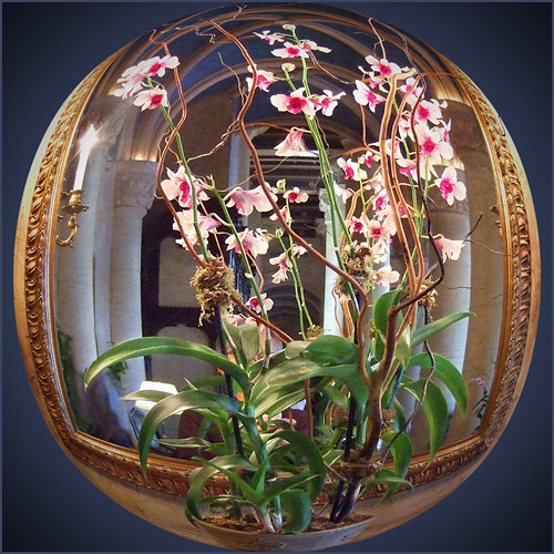 Mirrored Orchids
