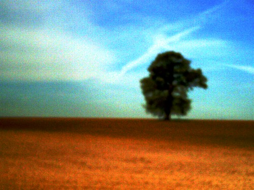 Lone Tree Dreaming In A Landscape Of Dreams