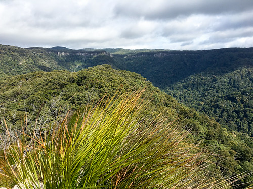 springbrooknationalpark thepinnacle hiking trailrunning springbrook queensland australia
