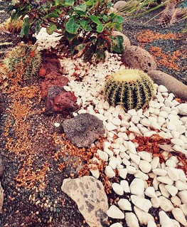 cactusazo
