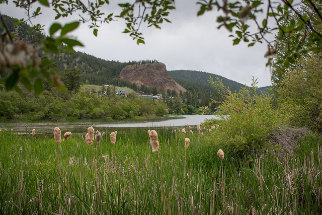 Williams Lake - Scout Island Views