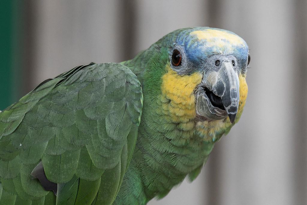 Longleat parrot
