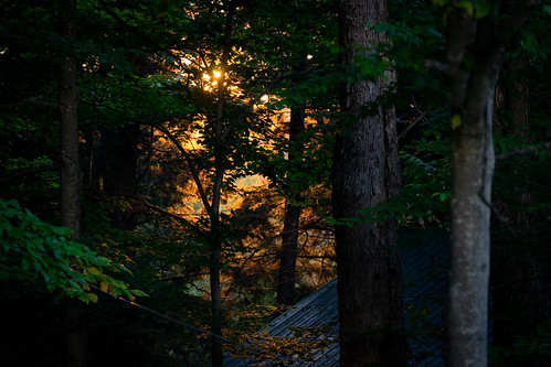 adirondacks newyork outdoors evening night woods trees covewood lodge vacation summer leaves green trunks sunset sun orange sky sony alpha a7 sel70300g sonyshooter john brighenti johnbrighenti