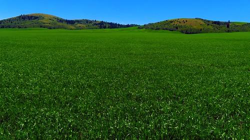 pocatello idaho unitedstates rollinghills grass farmland ranch green verdant yextidaho
