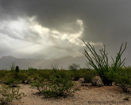 4cornersphoto arizona cactus clouds color crepuscularrays desert landscape monsoon mountains nature northamerica ocotillo outdoor pimacounty rain rural saguaronationalpark scenery sky sonorandesert storm summer thunderstorm unitedstates weather tucson us