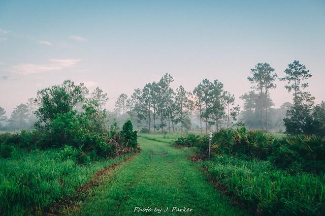 Lower Green Swamp Nature Preserve