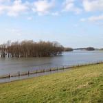 Bei einem winterlichen Hochwasser stand das Deichvorland der Walsumer Rheinaue unter Wasser