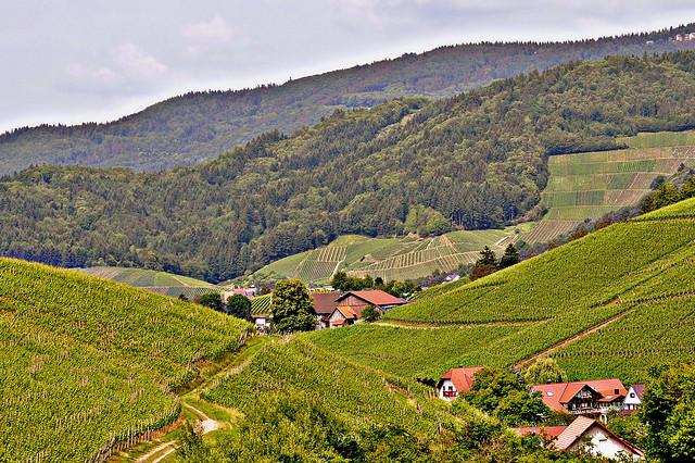 Waldulm (1) Forêt Noire