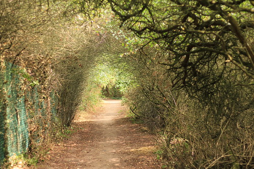 Tree tunnel | by knautia