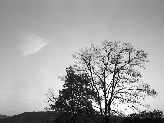 Zachód słońca za drzewem / Sunset behind a tree
