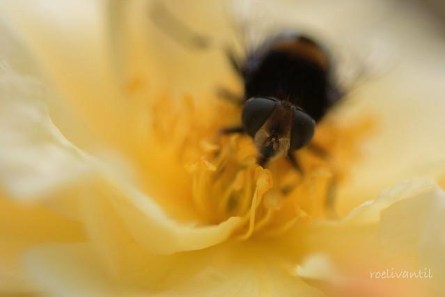 In mijn tuin/In my garden