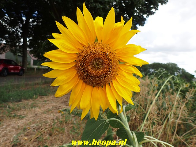 2018-08-10         2e dag          Heuvelland       31 Km  (119)
