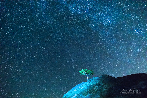 perseidmeteor tree onetree singletree perseidmeteorshowers sky blue night stars astrophotography meteors nature lanscapes comet starry colorado rockymountains jamesinsogna photography unitedstates