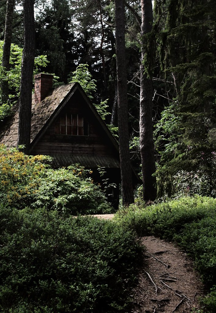 Cozy Cabin Into The Woods Hd Photos And Wallpaper Directory