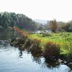 Das Ufer der Ruhr in der Heisinger Ruhraue im herbstlichen Gegenlicht