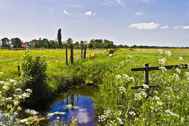 Frysian landscape near Wijckel ... (8854)