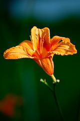 <button type=&quot;button&quot; class=&quot;btn btn-primary btn-xs&quot; onclick=&quot;ImageToolBar('42899004685', 'nature', '');&quot;><img src=&quot;/files/pics/share-bright.png&quot; style=&quot;border:0;height:17px;&quot; /></button> Garden flower