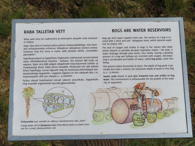 Viru raba / Viru raised bog, Estonia
