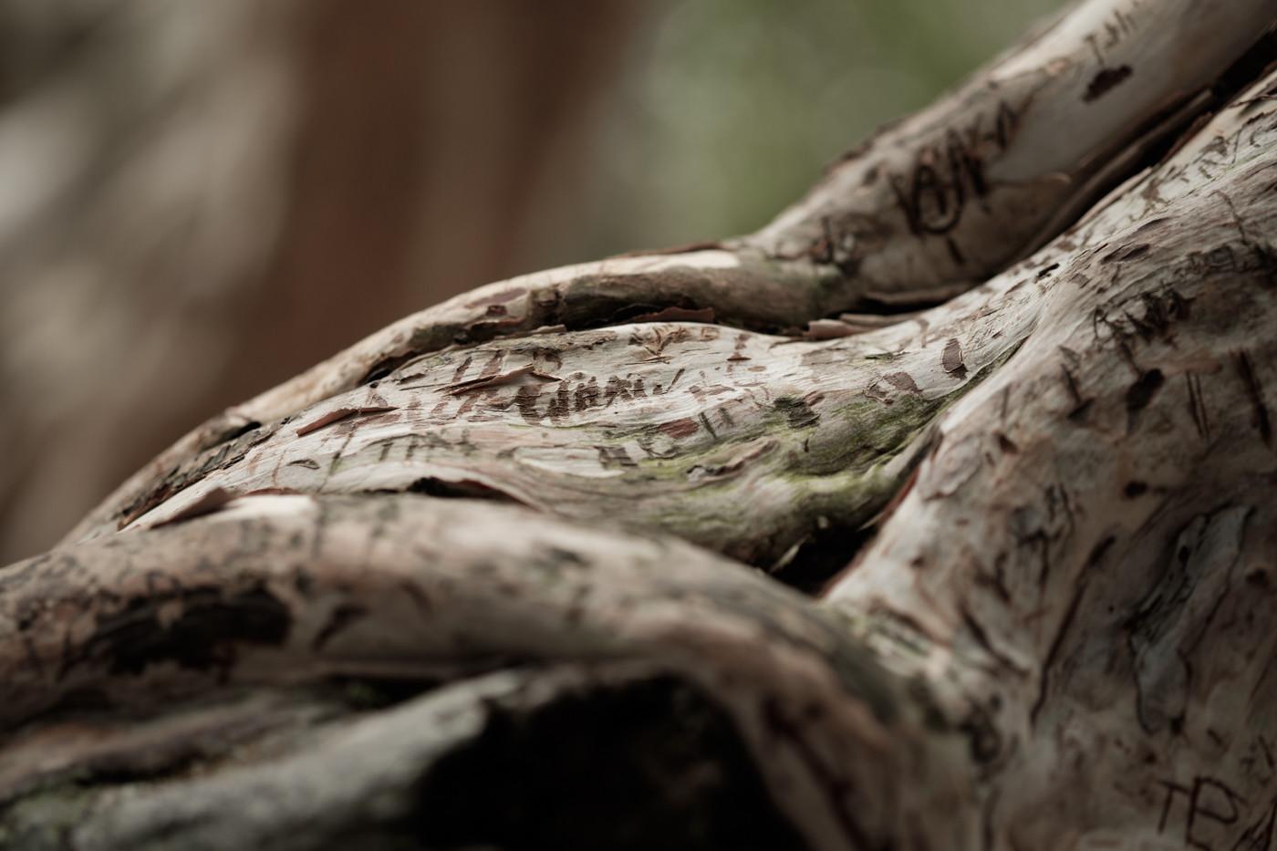 xf60mm f2.4 r macroの作例 レビュー 解像力 シンガポール 枯れ木