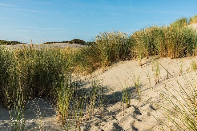 Burgh-Haamstede Dunes