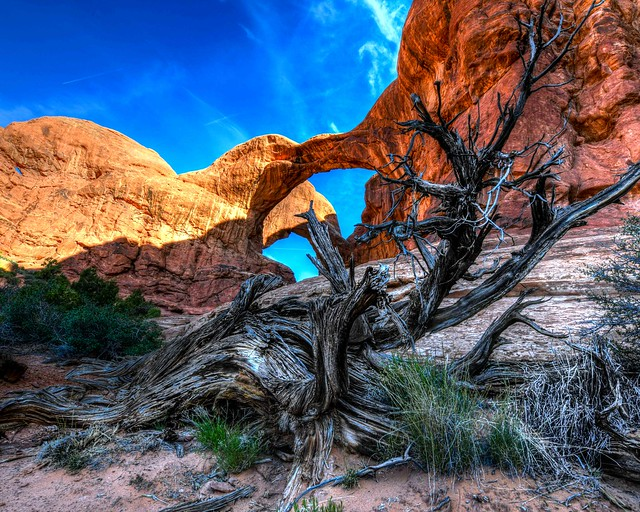 Double Arch Tree