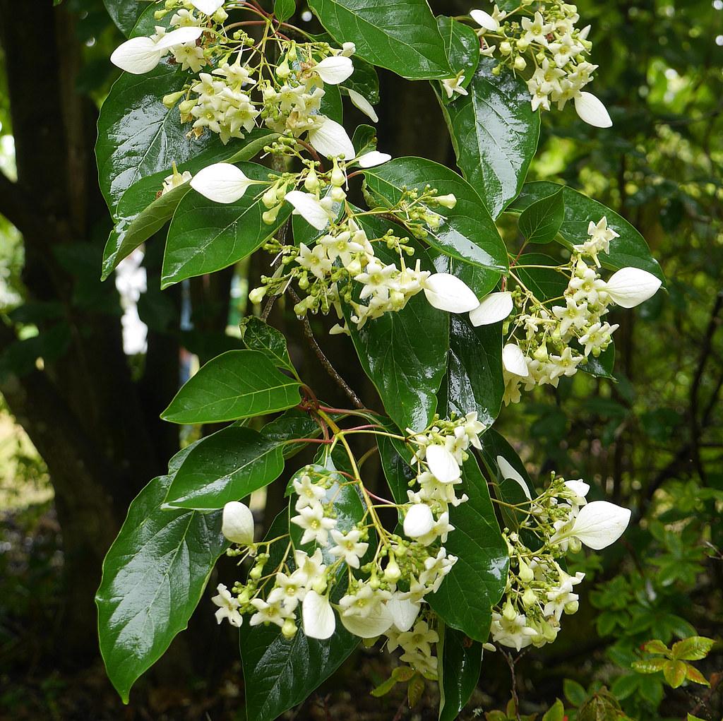 un arbre Martin le 1er Avril 2020 trouvé par Martine - Page 3 43972522131_1a41f387b2_b