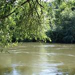 Unter einer Weide (Salix sp.) am Ufer der Ruhr in der Heisinger Ruhraue