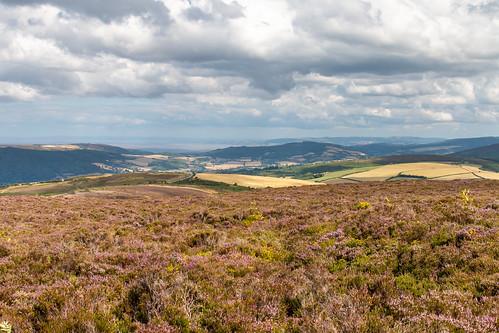 porlock common exmoor nationalpark heather moor gorse landscape undulating hill field grass road forest estuary river somerset england wales sky cloud vista