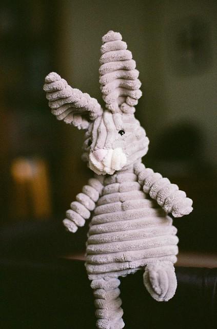 Rabbit - Nikon FM3A