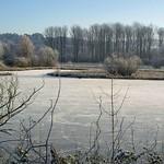 Teich in der Heisinger Ruhraue im Winter