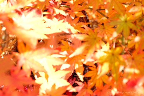 seoul_autumn_leaves | by Sammdaysoon