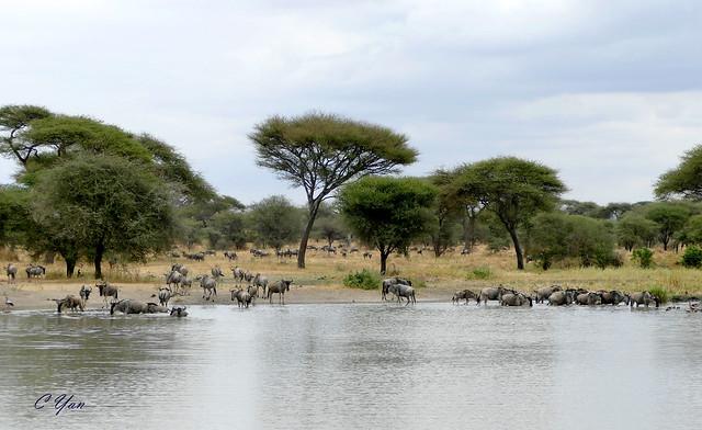 Kenya-Tanzania (Animal 1)