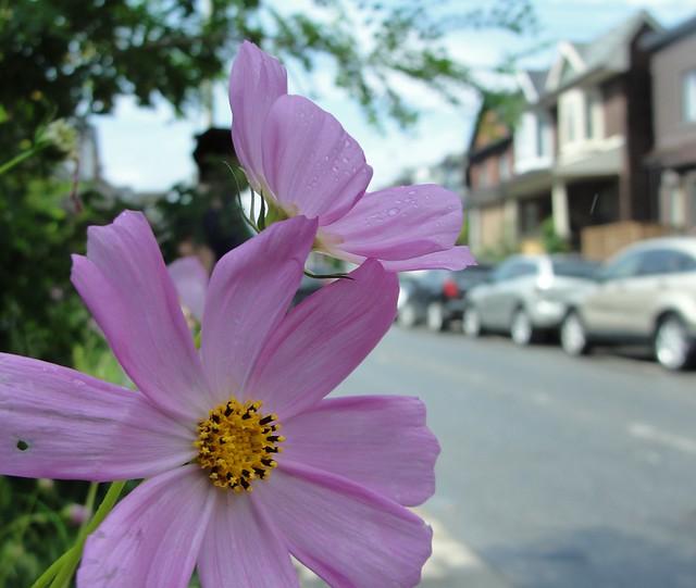 Photo Series: Flower Portraits: