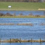 Rheinhochwasser im Deichvorland der Walsumer Rheinaue