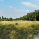 Die offene Fläche des Gleisparks Frintrop im Sommer