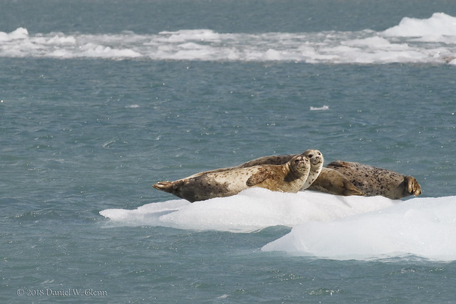 Lounging on ice...