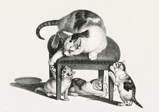 Illustration of domestic cats by Gottfried Mind (1768-1814). Original from Library of Congress. Digitally enhanced by rawpixel. | by Free Public Domain Illustrations by rawpixel
