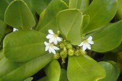 half flowers