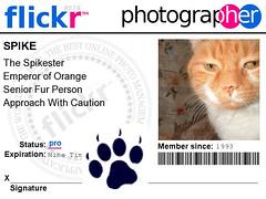 Spike's Flickr Badge