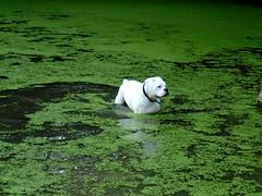 Dude takes a dip