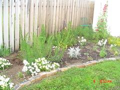 Garden view july 4,2005 003